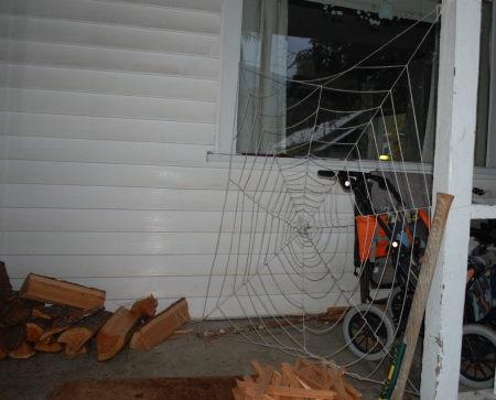 קורי עכביש אימתניים