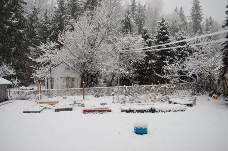 שלג על גני