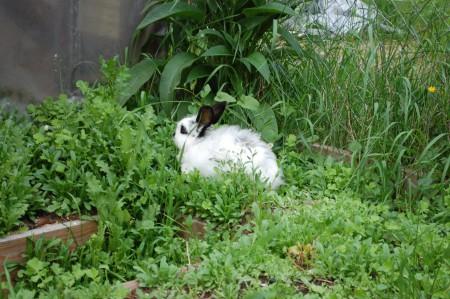 ככה נראה ארנב שמוק. לא שומעים בתמונה אבל אני מקללת את אמא שלו.