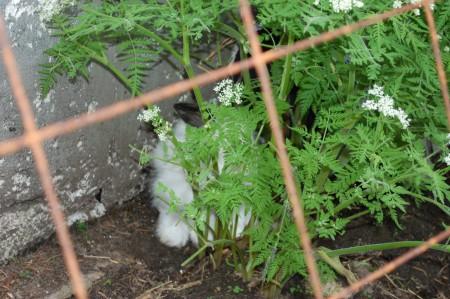 בכלמיני מקומות הוא אוהב להסתובב, הארנב