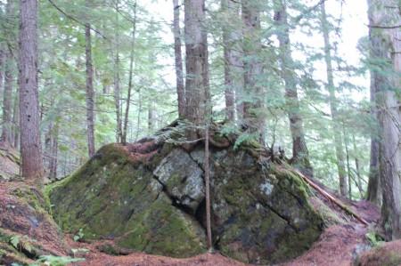 עץ וסלע