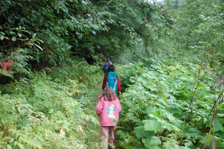 אל תוך היער