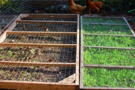 בחצר השניה המצב יותר טוב, המסגרות שלמות. מתחת למסגרת השמאלית לא צומח עשב כי הארנבונים מצאו דרך להיכנס מתחת והם מכרסמים את העשב במקור.