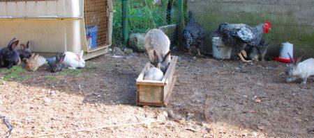 שאלו אותי כמה מתקני האכלה יש לי בשביל העופות. מה זה משנה כמה, בכל מקרה הארנבות משתלטות עליהם