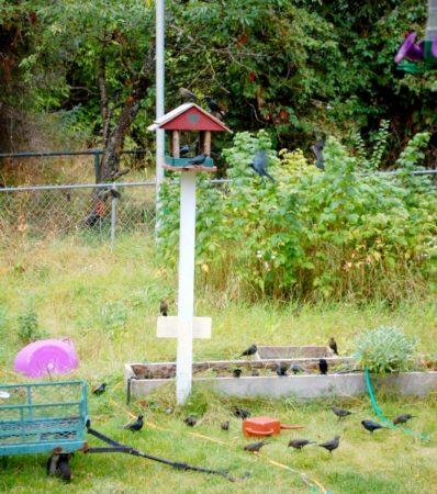 מדי פעם הן באות לבקר בלהק וגורמות להתרגשות. בתמונה: ציפורים שאני לא מזהה.