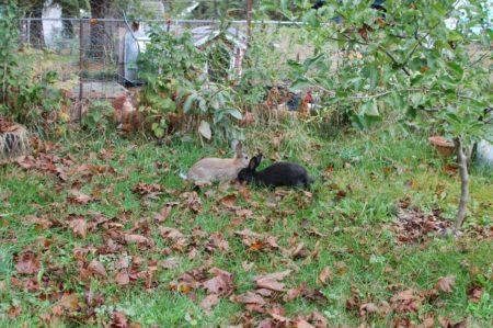 hiding-rabbits